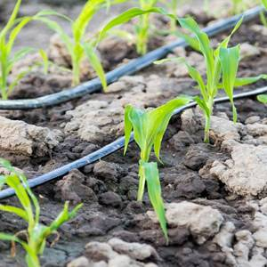 خرید لوله پلی اتیلن کشاورزی